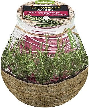 """Ароматна свещ в бурканче """"Citronella Garden Rosemary"""", 94/91 мм - Bolsius Candle — снимка N1"""