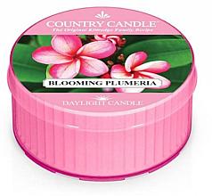 Парфюмерия и Козметика Ароматна чаена свещ - Kringle Candle Blooming Plumeria
