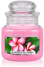 """Парфюми, Парфюмерия, козметика Ароматна свещ в бурканче """"Цъфтяща Плумерия"""" - Country Candle Blooming Plumeria"""