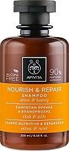 Парфюмерия и Козметика Възстановяващ и подхранващ шампоан маслиново масло и мед - Apivita Nourish And Repair Shampoo With Olive And Honey